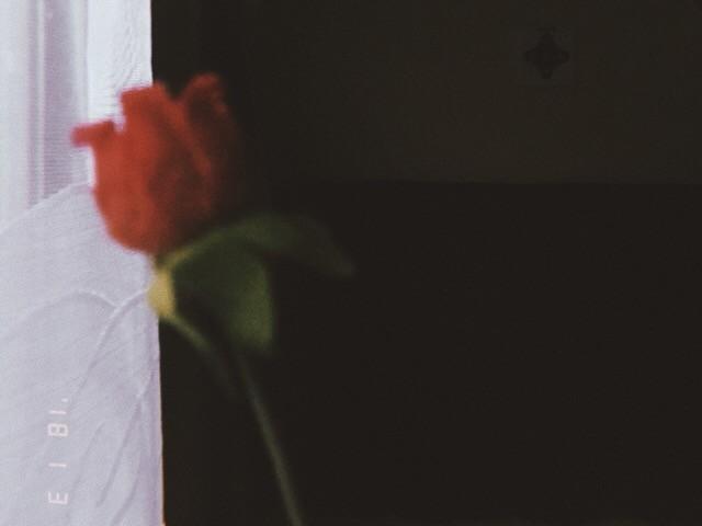玫瑰无声的呼吸